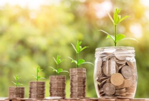 how to for growing money tree